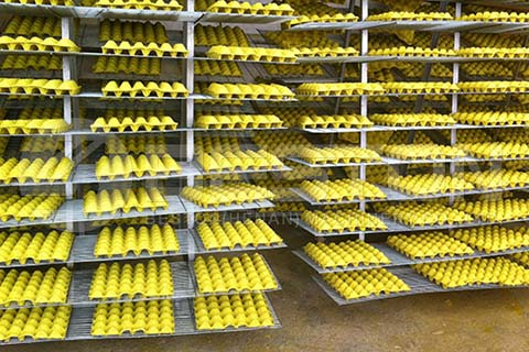 Egg Tray Manufacturing Project Report